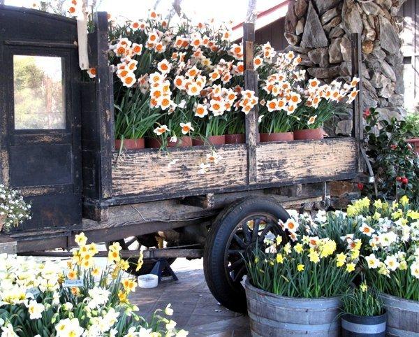 cebulki kwiatowe do nasadzeń jesiennych