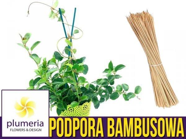 Tyczki bambusowe podpory