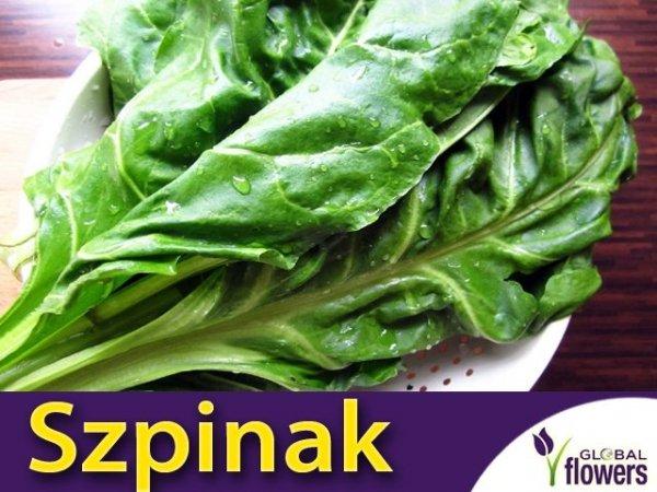 Szpinak Warzywny Olbrzym Zimowy (Spinacia oleracea) 10 g