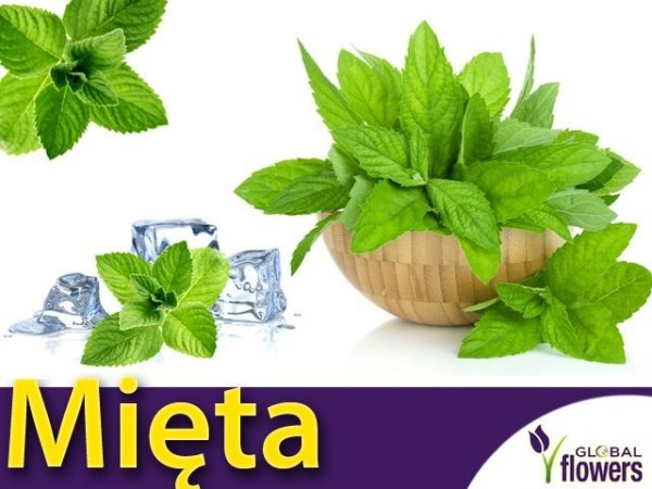 Mięta kłosowa (Mentha spicata) 0,1g