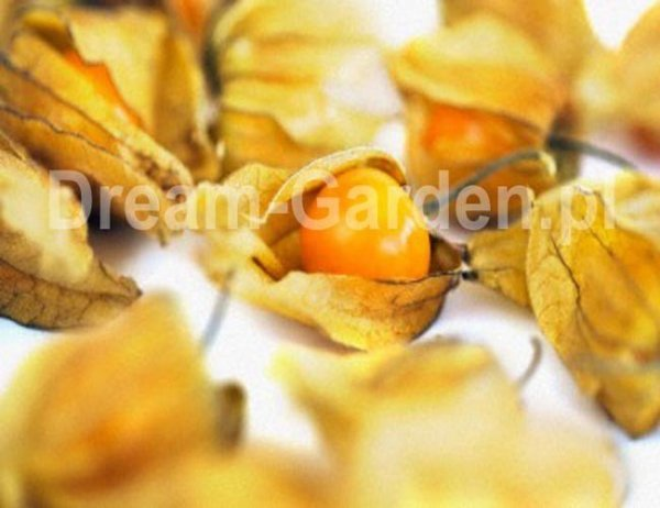 Oryginalne owoce miechunki
