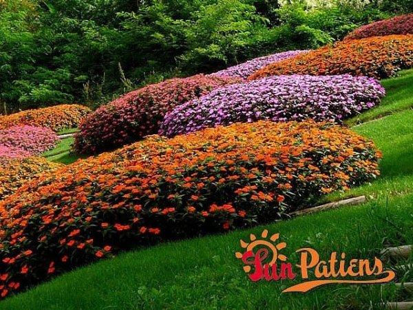 Odporne kwiaty rabatowe