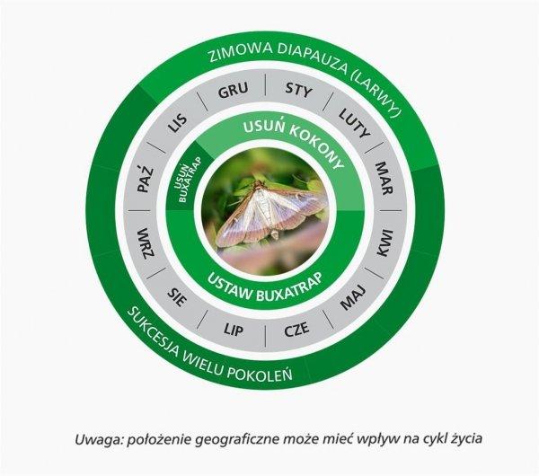 BUXATRAP pułapka feromonowa na Ćmę Bukszpanową