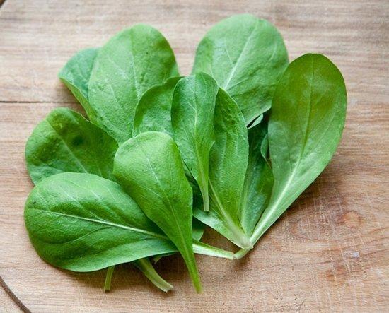 Baby Leaf Cykoria liściowa- doskonała do sałatki