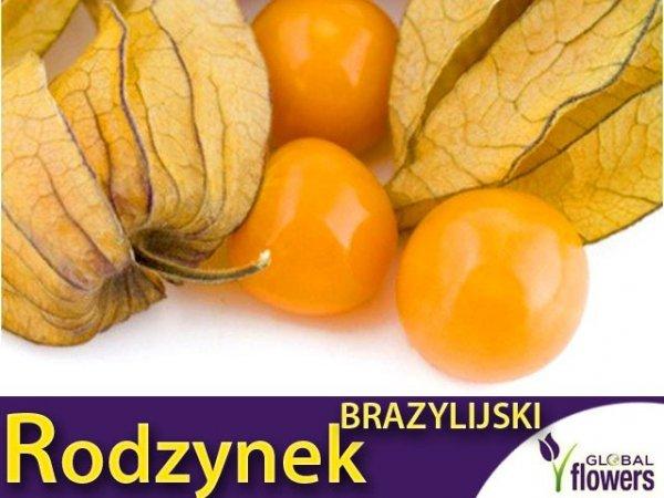 Rodzynek Brazylijski (Physalis peruviana)
