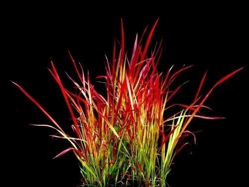 Kompozycje z kolorowych traw ozdobnych