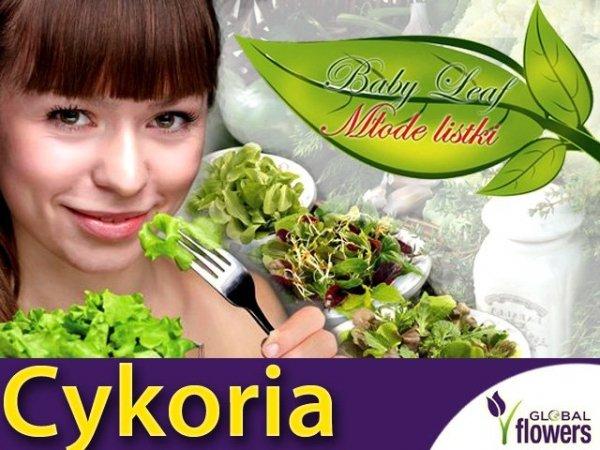 Baby Leaf Cykoria liściowa (Zuccherina di Trieste)