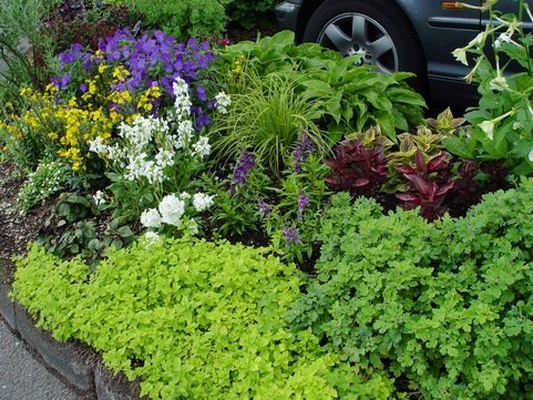 Świeże zioła w doniczce