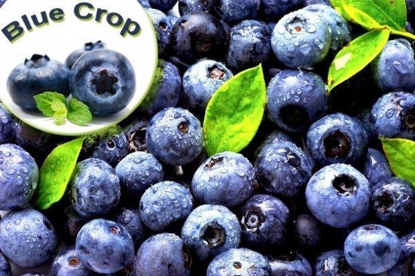 zdroe owoce borówki duża ilość witamin
