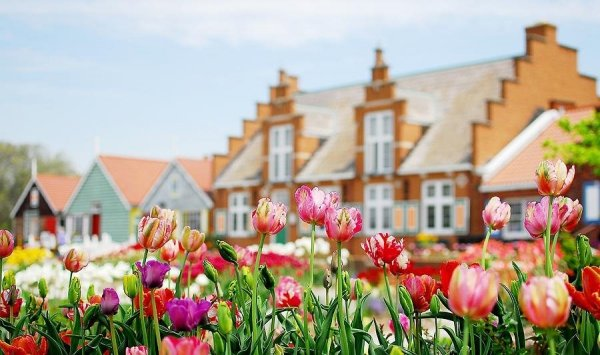 biały pełny tulipan elegancki do bukietów ślubnych