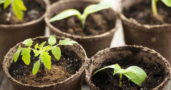 Bio uprawa doniczki torfowe