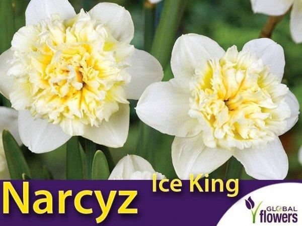 Narcyz pełny 'Ice King'