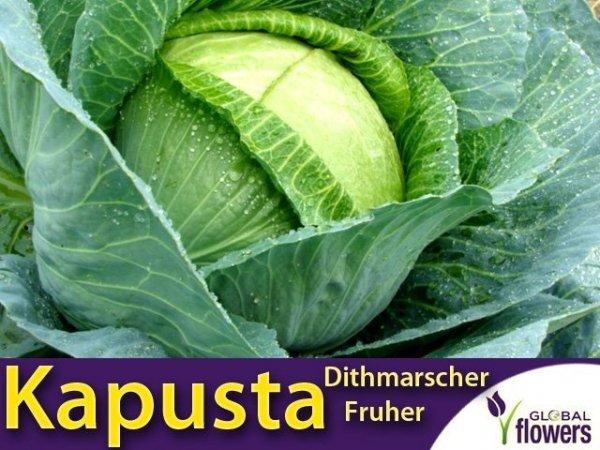 Kapusta Dithmarscher Fruher Ditmarska (Brassica oleracea convar) XL 100g