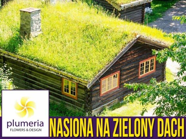 zielony dach mieszanka nasion cena gdzie kupić