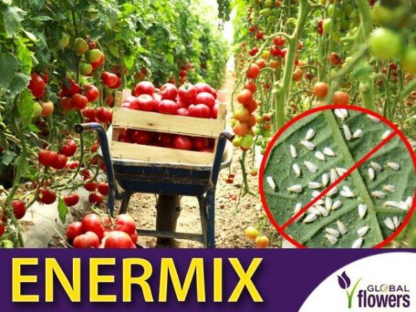 enermix , do ochrony pomidorów, papryk