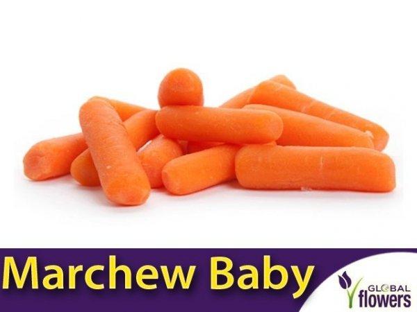 Marchew Typ Baby Mignon średnio wczesna