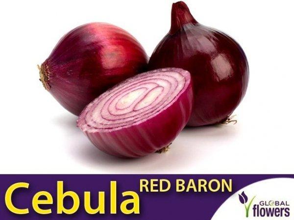 Cebula czerwona Red Baron
