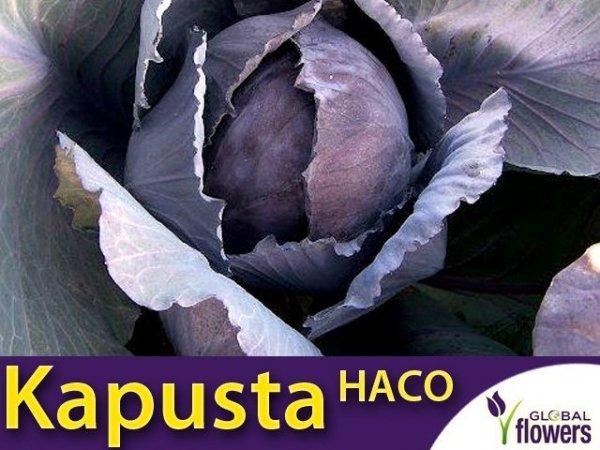Kapusta czerwona Haco (Brassica oleracea convar. capitata var. rubra) 2g