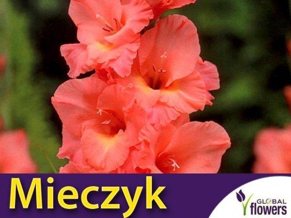 Mieczyk wielokwiatowy (Gladiolus) Praha
