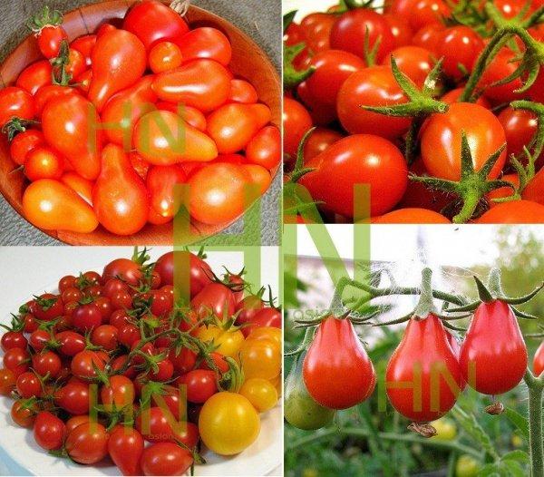 Pomidor Denar Polska Nowość (Lycopersicon Esculentum) Pomidor gruszkowy