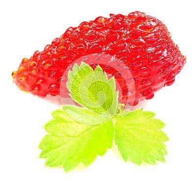 Poziomka o dużych owocach