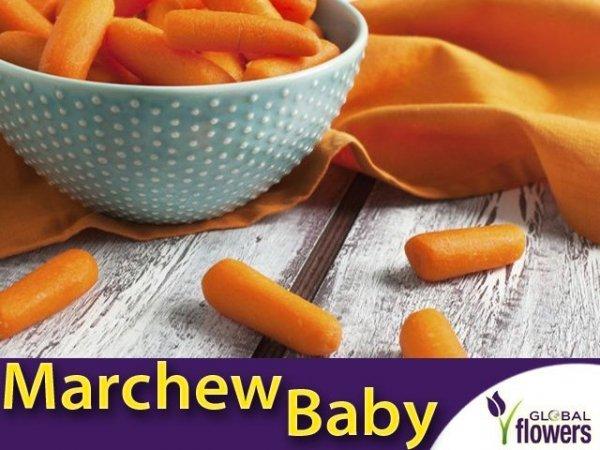 Marchew Typ Baby Mignon średnio wczesna (Daucus carota) 2g