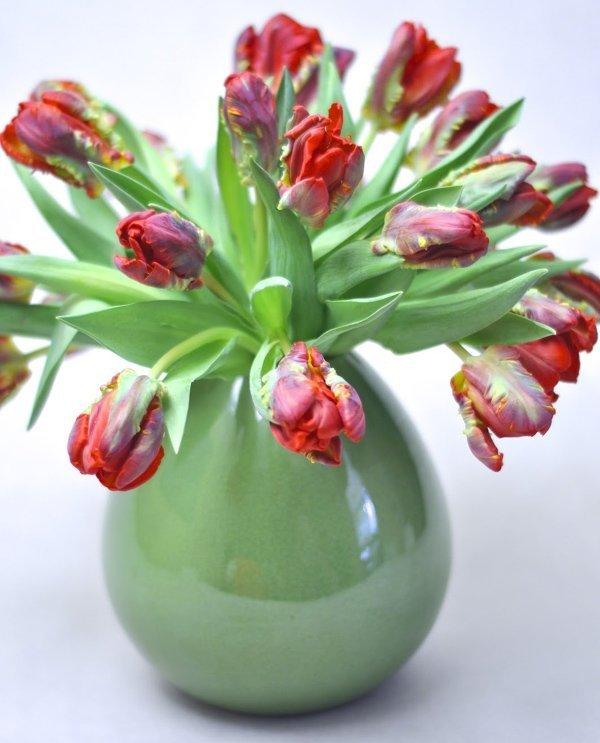 zachwycające tulipany papuzie