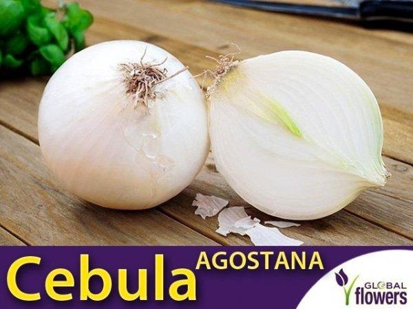Cebula biała Agostana (Allium cempa) XXL 500g
