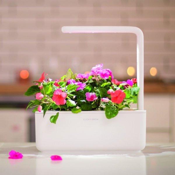 W doniczce Click and Grow Smart Garden można 3 gatunki wiele roślin jednocześnie