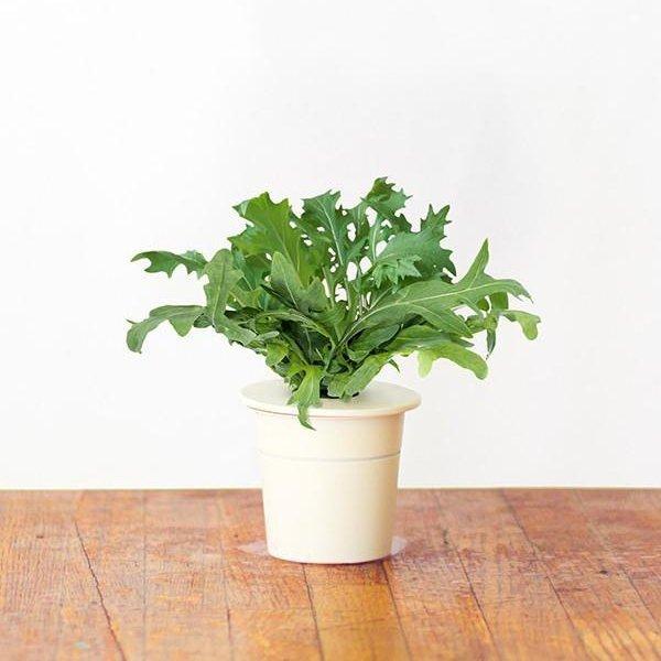 Click and Grow to prosta uprawa ziół w każdym wnętrzu