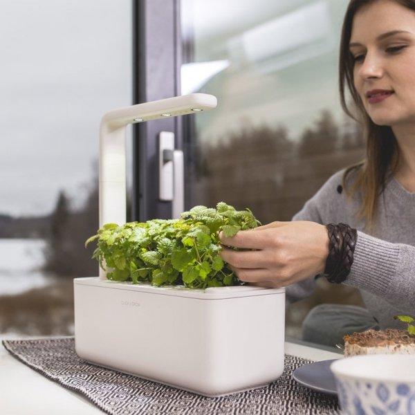 Doniczki Smart Garden 3 mają w zestawie 3 kapsułki z bazylią
