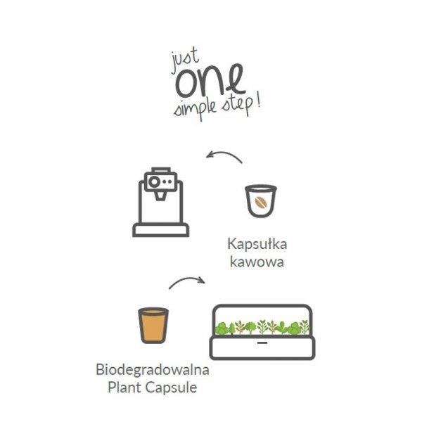 Inteligentne kapsułki z roślinami oraz glebą Smart Soil