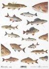 decoupage peces de papel*decoupage paper fish*Decoupage Papier Fisch