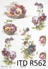 pansies, flower, flowers, leaf, leaves, flower petals, spring, R562