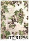 papier decoupage owoce, dzikie jeżyny*Paper decoupage fruit, wild blackberries