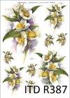 jaśminowiec, kwiat, kwiaty, kwiatek, kwiatki, krzew, krzewy, R387