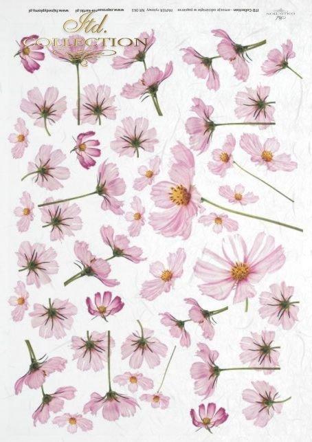 flower, flowers, meadow, garden, cosmos, R063