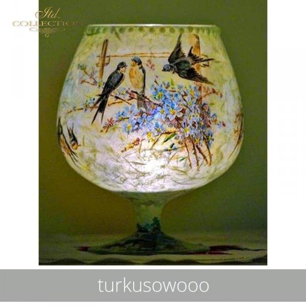 20190527-turkusowooo-R0672-example 01