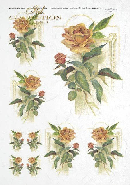 rose, roses, background, flower, flowers, majestic roses in the lead role, R254