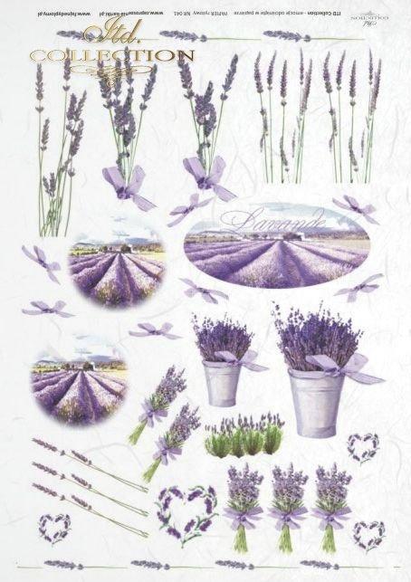lawenda, flower, flowers, lavender, lavender field, lavender bouquets, bouquet, R041