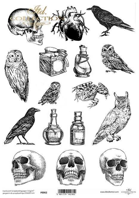 Pergamin do scrapbookingu, Symbole, kruk, kruki, czaszka, czaszki, sowa, sowy, serce, fiolka, fiolki