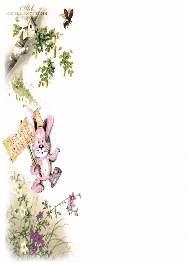 Diplomas Bunny