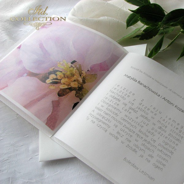 Invitations / Wedding Invitation 1731_46_apple_blossom