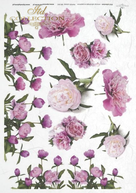 peonia, peonie, peony, peonies, flower, flowers, bouquets, bouquet, R042
