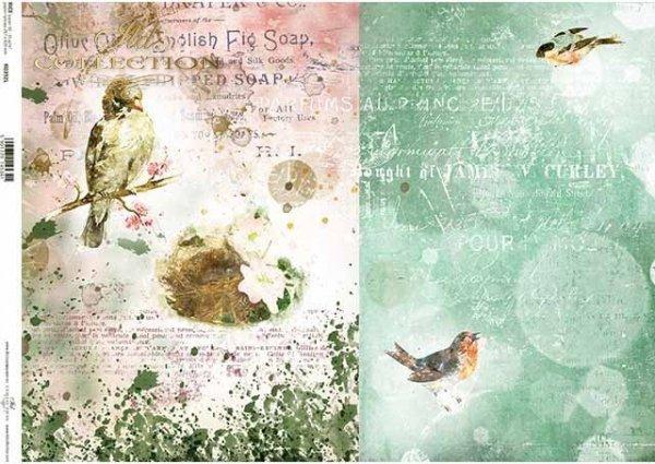R0392L * wiosna, ptaki, spring, birds, Frühling, Vögel, primavera, pájaros