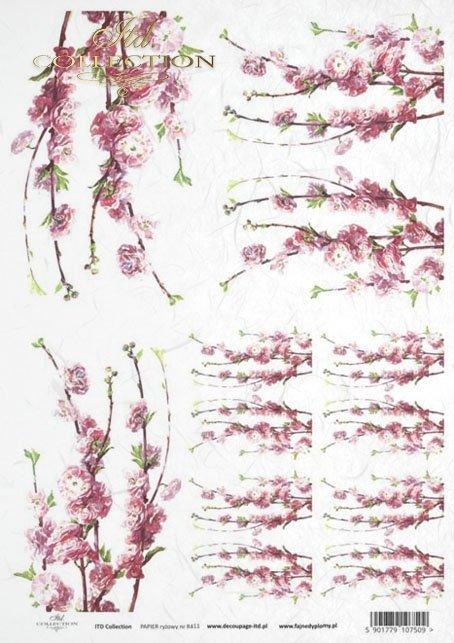 flower, flowers, leaf, leaves, flower petals, blossoming apple tree,  apple tree flower, R411