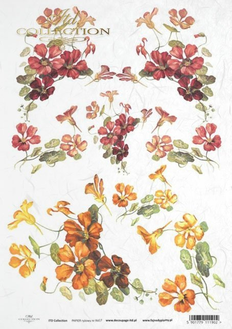 flower, flowers, leaf, leaves, flower petals, spring, nasturtium, nasturtiums, R417