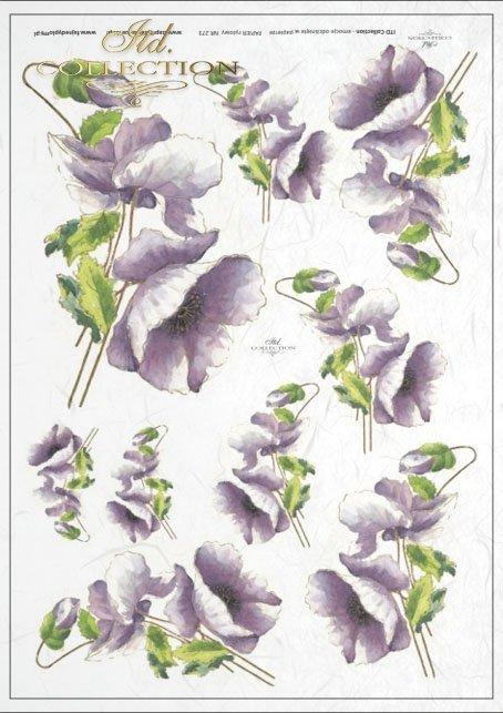 Flowers, poppies, field flowers, field poppies, violet flowers, R273