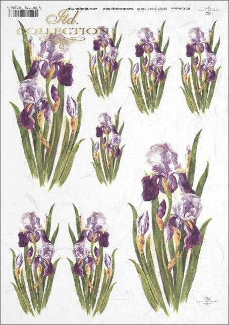 iris, irises, flower, flowers, R389