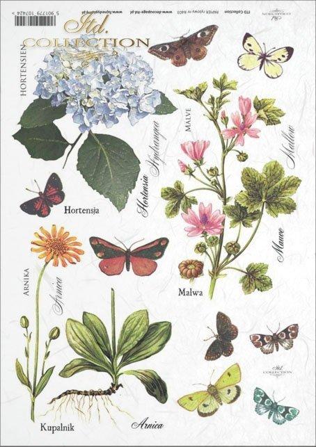 meadow, plants, butterfly, butterflies, hydrangea, mallow, arnica, merchant, flower, flowers, R403